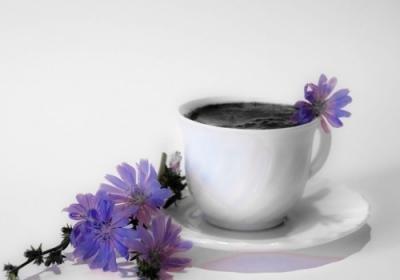 Можно ли пить цикорий при грудном вскармливании?